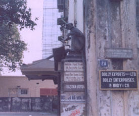 Spot the monkey! 1974, Calcutta.