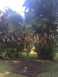 tiny tree foster gardens
