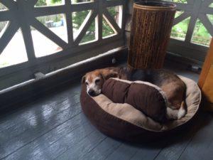 charlie on sleeping porch