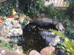 fish-pond-photo